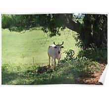 Cuban landscape Poster