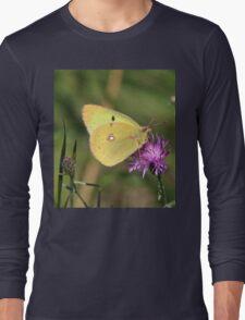 Beautiful Clouded Yellow Butterfly Long Sleeve T-Shirt