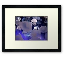 Floating Jelly Fish Framed Print