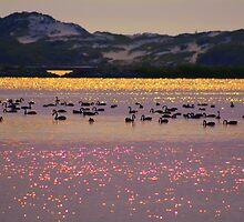 Black Swan Serenade  by Chris Paddick