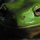 Green tree frog! by KiriLees