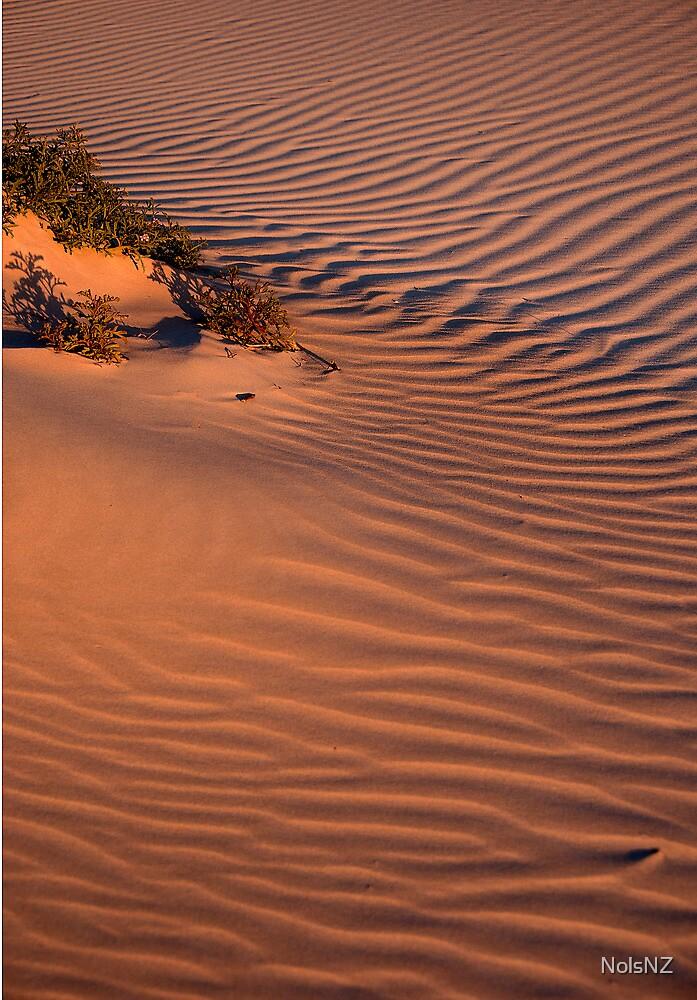 Dune Life by NolsNZ