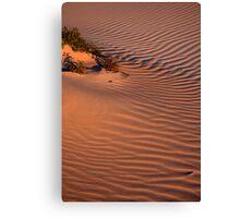 Dune Life Canvas Print