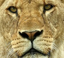Up Close and Personal by Mark Hughes