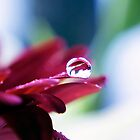 Droplet by aka-photography