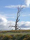 Lifeless tree by Margaret  Hyde