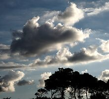 Clouds and Trees by Noam Gordon