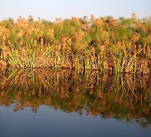 Sunset on the Okavango Papyrus by Margaret  Hyde