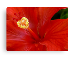 The Reddest Red is Hibiscus Red Canvas Print