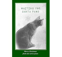 Christmas Pet Greeting Card - Waiting For Santa Paws Photographic Print