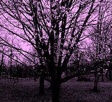 Pretty in Pink by Dawn di Donato