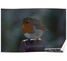 A Robin Poster