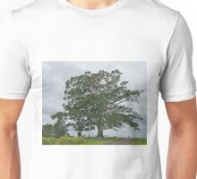 Moreton Bay Fig, Ficus macrophylla, (family Moraceae) Unisex T-Shirt