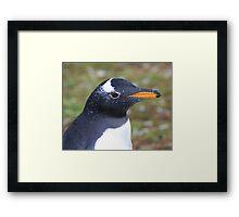 Gentoo Penguin - Head Shot Framed Print