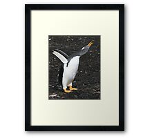 Gentoo Penguin - Something to Say! Framed Print
