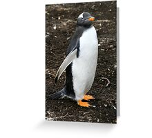 Gentroo Penguin - Welcome to my World!! Greeting Card