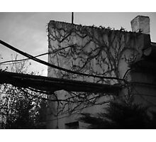 The nature wins... Photographic Print