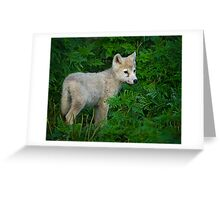 Young Pup  Greeting Card