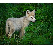 Young Pup  Photographic Print