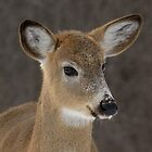 Doe Portrait by Heather Pickard