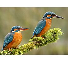 Mr & Mrs Kingfisher Photographic Print