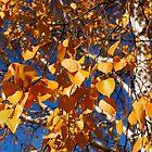 Autumn leaves by Eduard Isakov
