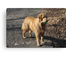 I Got The Ball In My Mouth Can You Tell? - 11 Canvas Print