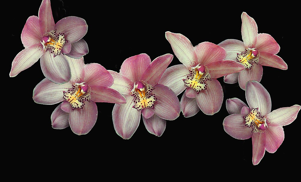 Flying Orchids by Mistyarts