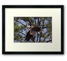 Look lady, this is the closest you will ever get to me Framed Print