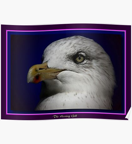 The Herring Gull (2) Poster
