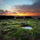The green mantle of the sea by Saverio Savio
