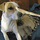 jerzy and her pups by gabbielizzie