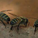 The Bee Stooges! by KiriLees