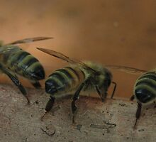 The Bee Stooges! by KiriLees