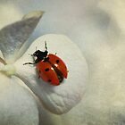 Ladybird and hydrangea by Ellen van Deelen
