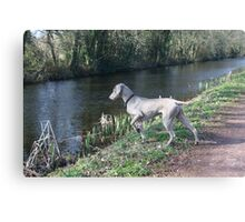Hunting a Duck Canvas Print
