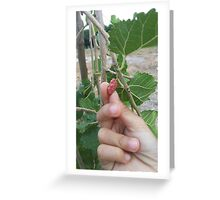 Mulberry Fruit Greeting Card