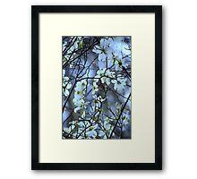 Dogwood ~ Florida, March 5th Framed Print