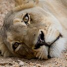 The Stare by Michael  Moss