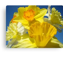 Spring Bright Yellow Daffodil Flowers Photograhy Baslee Troutman Canvas Print