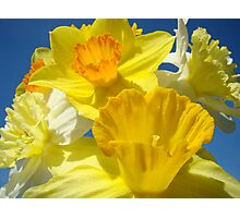 Spring Bright Yellow Daffodil Flowers Photograhy Baslee Troutman Photographic Print