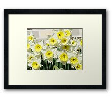 Spring Floral Daffodils Garden Yellow art Baslee Troutman Framed Print