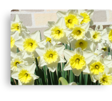 Spring Floral Daffodils Garden Yellow art Baslee Troutman Canvas Print