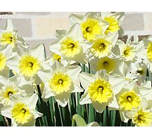 Spring Floral Daffodils Garden Yellow art Baslee Troutman Photographic Print