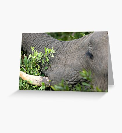 A Different Point of View Greeting Card
