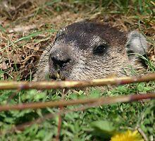 Peek a Boo I see you by bozette