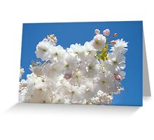 Spring Blue Sky Pastel Pink White Tree Blossoms Baslee Troutman Greeting Card
