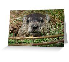 Peek a Boo I see you 3 Greeting Card