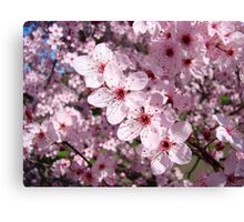 Spring Pink Tree Blossoms Colorful Floral art Baslee Troutman Canvas Print