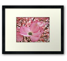 Tree Flowers Pink Dogwood Blossoms Spring Baslee Troutman Framed Print
